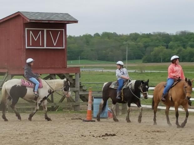 MVF Horses